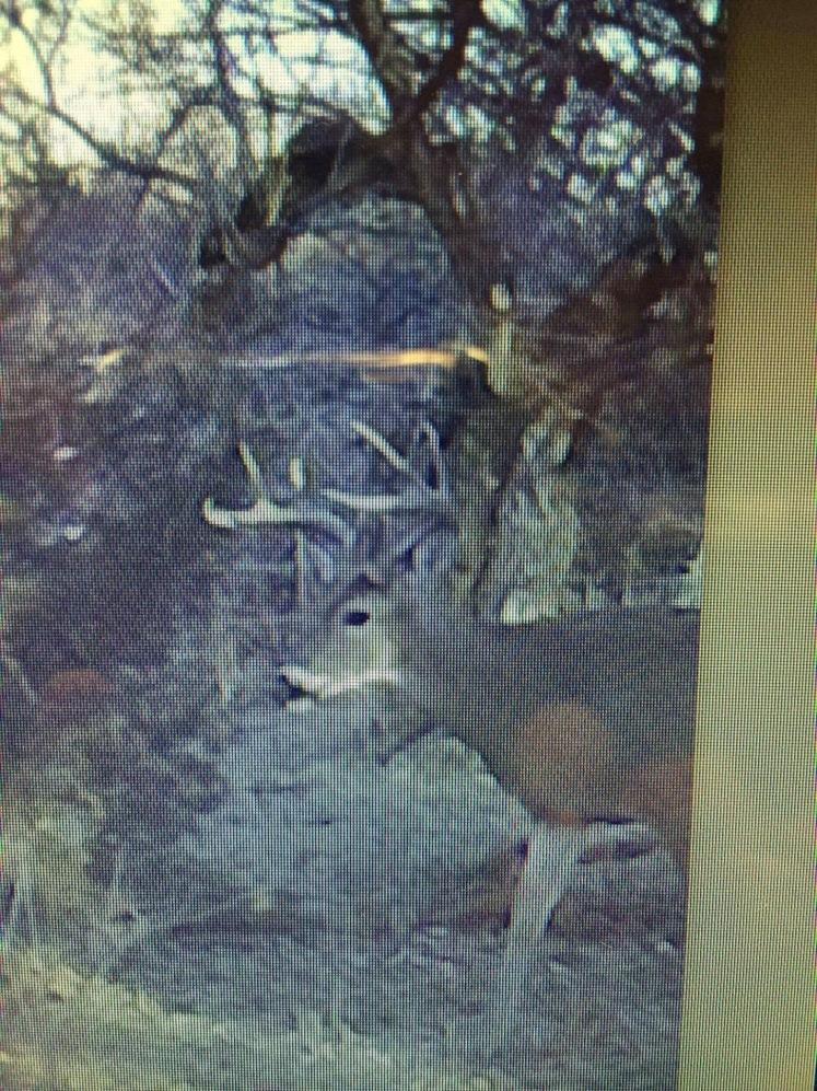 nice Kansas buck