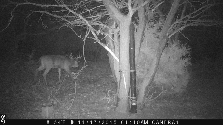 photo of buck from trail cam
